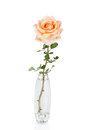 Rose in Vase Royalty Free Stock Photo