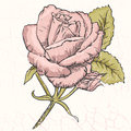 Rose on vintage background with cracks Royalty Free Stock Image
