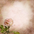 Rose on a vintage background with with space for text or photo Royalty Free Stock Photo