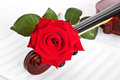 Rose violin and musical notebook on a white background Stock Image