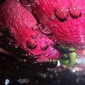 Rose water bubble Stock Photos