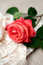 Rose with water drops and vintage lace Stock Photo