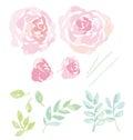 Rose watercolor flowers kit for design.