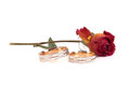 Rose and wedding rings on white background Royalty Free Stock Photo