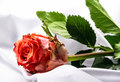 Rose on white satin red Royalty Free Stock Photos