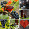 Rose wine collage with different photos of Royalty Free Stock Photos