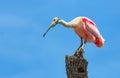 Ružový lyžičiar na strom kufor
