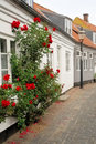 Rosebush Street Royalty Free Stock Images