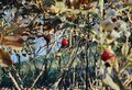 rosehip branch leaf berry autumn nature multicolors Royalty Free Stock Photo