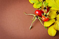 Rosehip fruit and autumn yellow leaves on brown background close up autumn backgrounds copy space background Stock Photo
