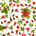 Rosehip isolated seamless Stock Photo