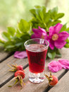 Rosehip liquor Stock Photography