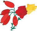 Rosehip vector illustration of the Royalty Free Stock Image