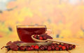 Rosehips and cup tea on background autumn leaves a of a of Royalty Free Stock Image