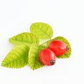 Rosehips isolated on white background Royalty Free Stock Photo