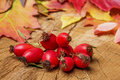Rosehips red and autumn leaves Royalty Free Stock Photos