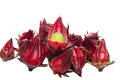 Roselle on a white background Stock Photos