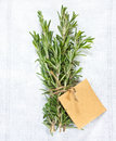 Rosemary. Royalty Free Stock Photography