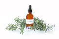 Rosemary extract bottle of with sprigs of the herb rosmarinus officinalis Stock Image