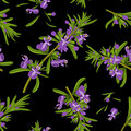 Rosemary flowers seamless texture