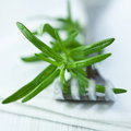 Rosemary on fork Royalty Free Stock Images