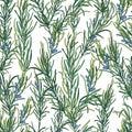 Rosemary herb pattern