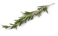 Rosemary isolated on white. Royalty Free Stock Photo