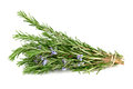 Rosemary isolated on white Royalty Free Stock Photo