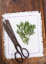 Rosemary on a light napkin next to the old scissors Stock Photos