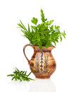 Rosemary, oregano and parsley in a jar Royalty Free Stock Photo