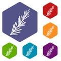 Rosemary spice icons set hexagon