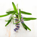 Rosemary sprigs and dried lavender flowers