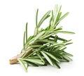 Rosemary twig isolated on a white background Stock Image