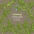 Rosemary vector frame