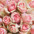 Stock Image Roses