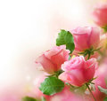 Stock Photography Roses