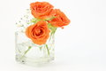 Roses and baby s breath photographed in glass vase on a white background Stock Photography