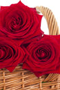 Roses in a basket Royalty Free Stock Photos