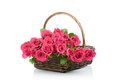 Roses in the basket fresh pink isolated on white background Royalty Free Stock Photos
