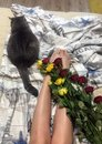 Roses and cat Royalty Free Stock Photo