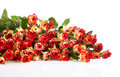 Roses in a bunch isolated on a white background Royalty Free Stock Photography