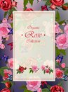 Roses and butterflies Royalty Free Stock Photo