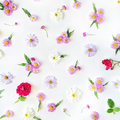 Roses, chamomiles and green leaves on white background Royalty Free Stock Photo