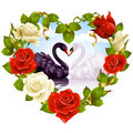 Roses and couple Swans Royalty Free Stock Photo