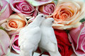 Roses and doves Royalty Free Stock Photography