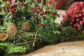 Roses in flowerbed, floristry Royalty Free Stock Photo