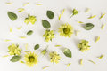 Roses, green flowers and leaves on white background. Royalty Free Stock Photo