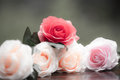 Roses made of fabric Royalty Free Stock Photo