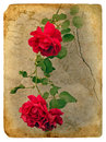 Roses. Old postcard Royalty Free Stock Photos