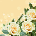 Roses on peach backround background with white Stock Images